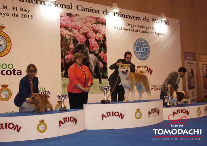 B.I.S. Exposición canina Internacional de Madrid 2013