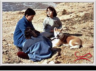 Akita.es - Criador de Akita en España