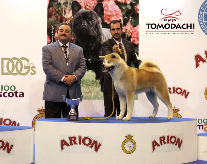 Best of Group Medina de pomar 2013. Fudoumaru go Naruse Takeda