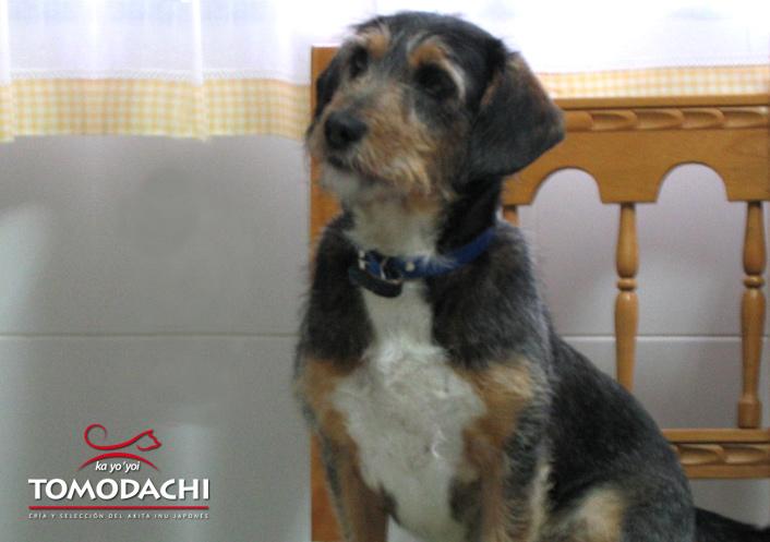 Querida Desideria, Adoptada de la Perrera Municipal 1996-2012