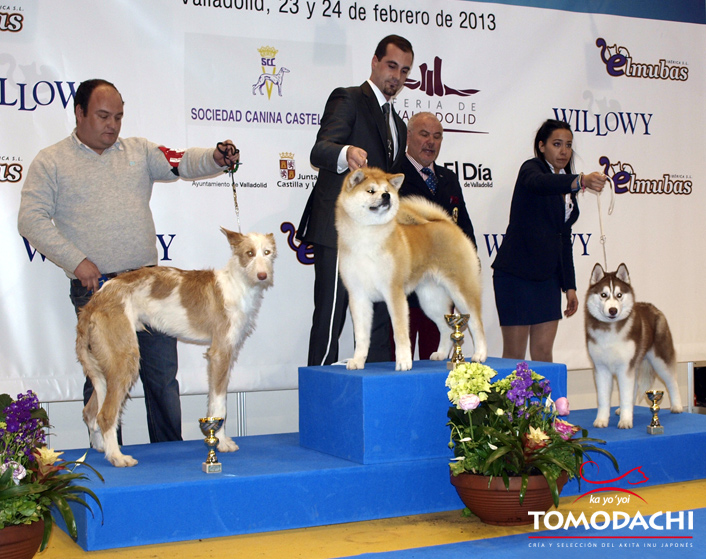 Best of Group Valladolid 2013. Tomodachi go Shun´You Kensha