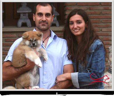 Cría de Akita en España